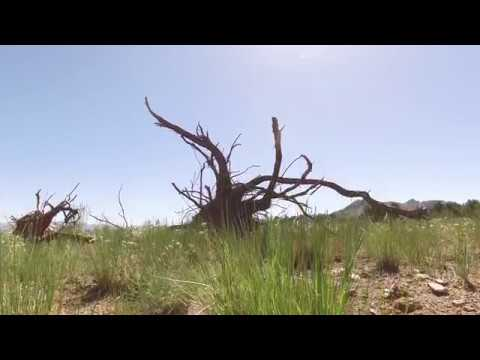 Get the Full Story:  Utah's Watershed Restoration Initiative