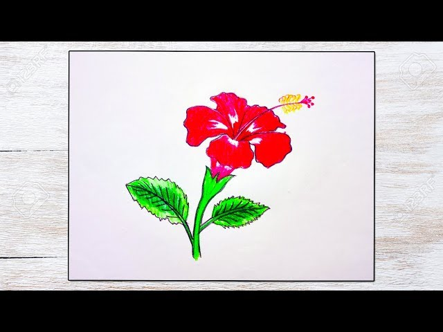 How to draw China Rose / Hibiscus flower step by step very easy vid-9