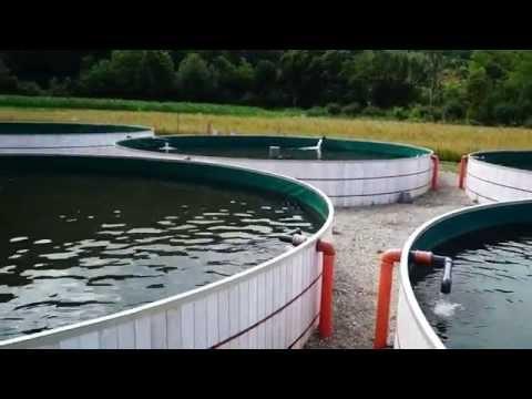 Generator Oxygen - Novara Invest SRL