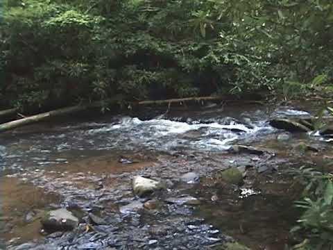 Bear Creek Relax