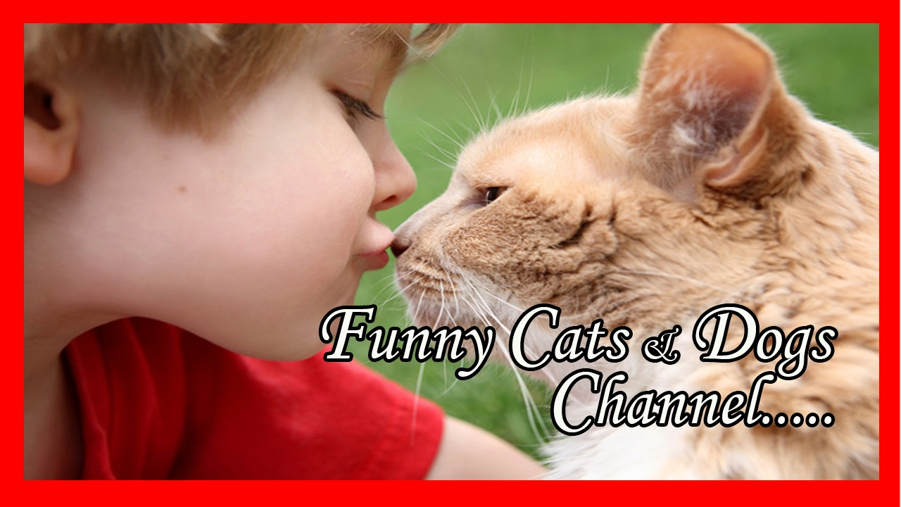 Funny cat names female - Funny female cat names-Videos Of Funny Cats