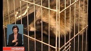 Єнотовидну собаку врятували в Сумах