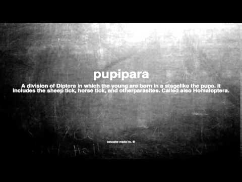 What does pupipara mean