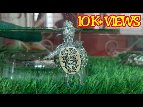Red Eared Slider Turtle Tortoise Setup , Diet And Care 🐢🐢🐢 Part 1