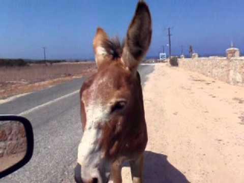 Karpaz Wildlife - Northern Cyprus