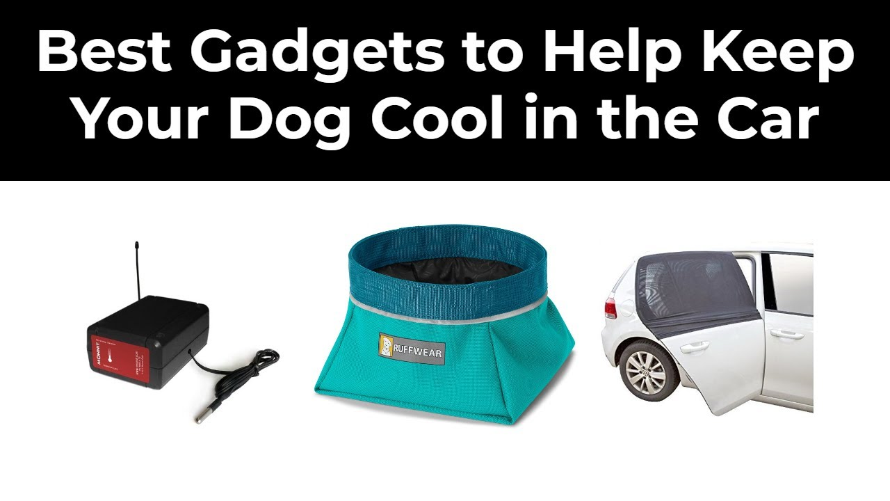 Best Gadgets to Help Keep Your Dog Cool in the Car in 2020 ...