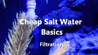 Cheap Salt Water Basics - Filtration (NO SUMP!)
