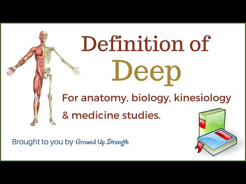 Deep Definition (Anatomy, Biology, Medicine, and Kinesiology)