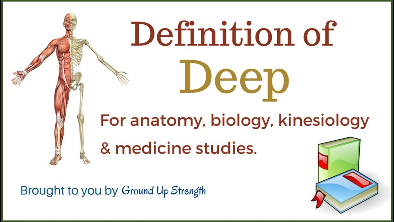 Deep Definition Anatomy Biology Medicine And Kinesiology Youtube