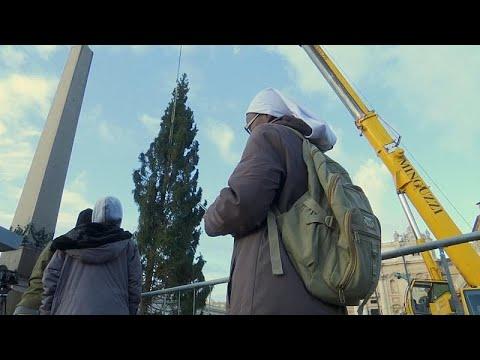 شاهد: شجرة عيد الميلاد تصل إلى ساحة القديس بطرس في الفاتيكان …