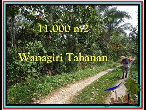 FOR SALE Beautiful LAND IN TABANAN BALI TJTB213