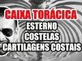Vídeo Aula 106 - Anatomia Humana - Caixa Torácica: Esterno, Costelas e Cartilagens Costais