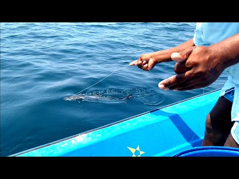 LONGLINE FISHING//KING FISH, DOLPHINS FISH AND TREVALLY FISH CATCHING AT OFFSHORE
