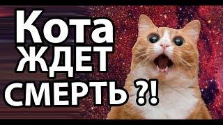 Сколько может прожить кот в открытом космосе ?!