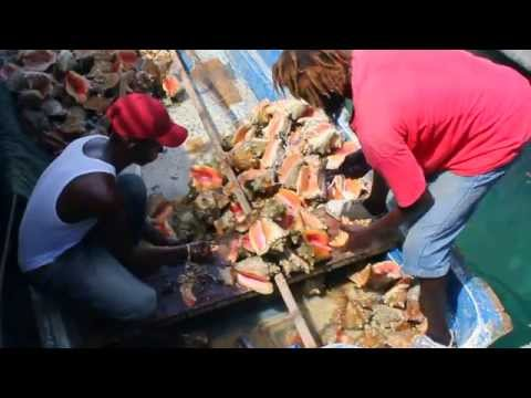 1 Cleaning conch.MOV