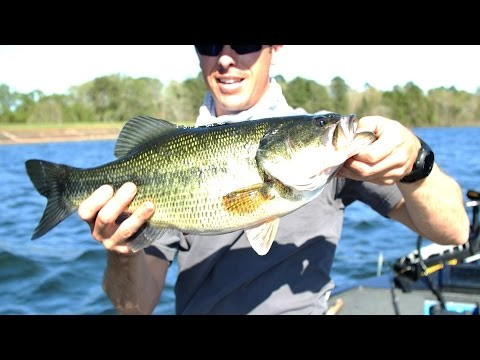 Pre Spawn Bass Fishing Offshore