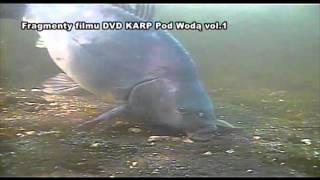 DVD KARP Pod Wodą vol.1 - fragmenty