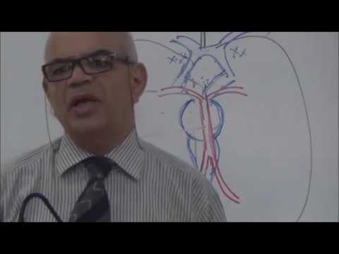 ◄╣ Neuroanatomy ♦ 13th Lecture ♦ Brain's Blood Supply ╠►