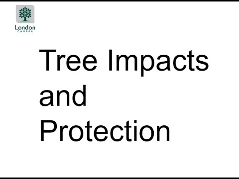 Presentation 3 : Tree Impacts and Protection for Sackville Street