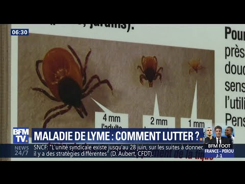 L'inquiétante progression de la maladie de Lyme en France