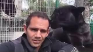 Поцелуй  пантеры это круто.