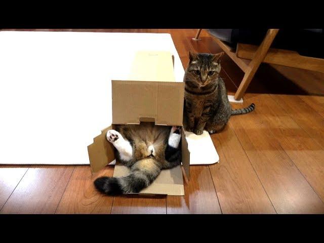 たぶん-箱の中で寛いでいるねこ-probably-maru-is-relaxed-in-the-box