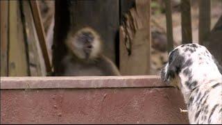 Animals Like Us - Animal Emotions
