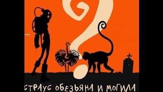 Обезьяна, страус и могила / трейлер 2016