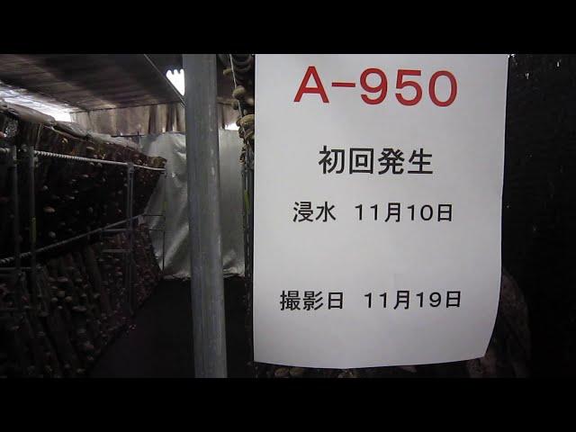 A950 初回発生2020