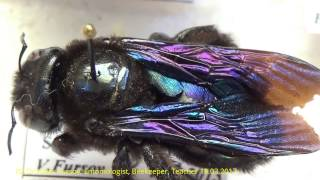 Macro Video: Do You Know Dangerous Stinging Wasps and Bees?