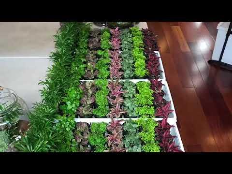 Terrarium Classes At Roosevelt S Terrariums Youtube