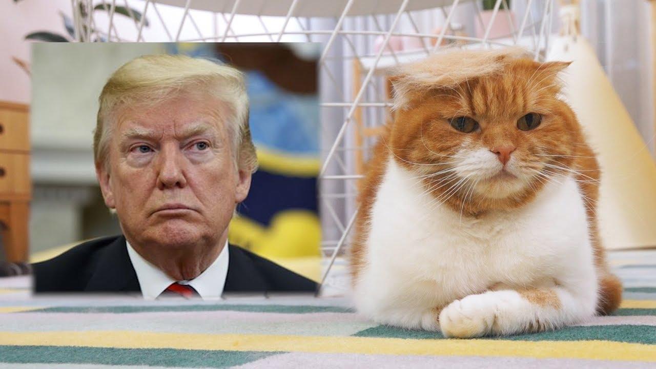 트럼프-가발-쓴-고양이-노럼프