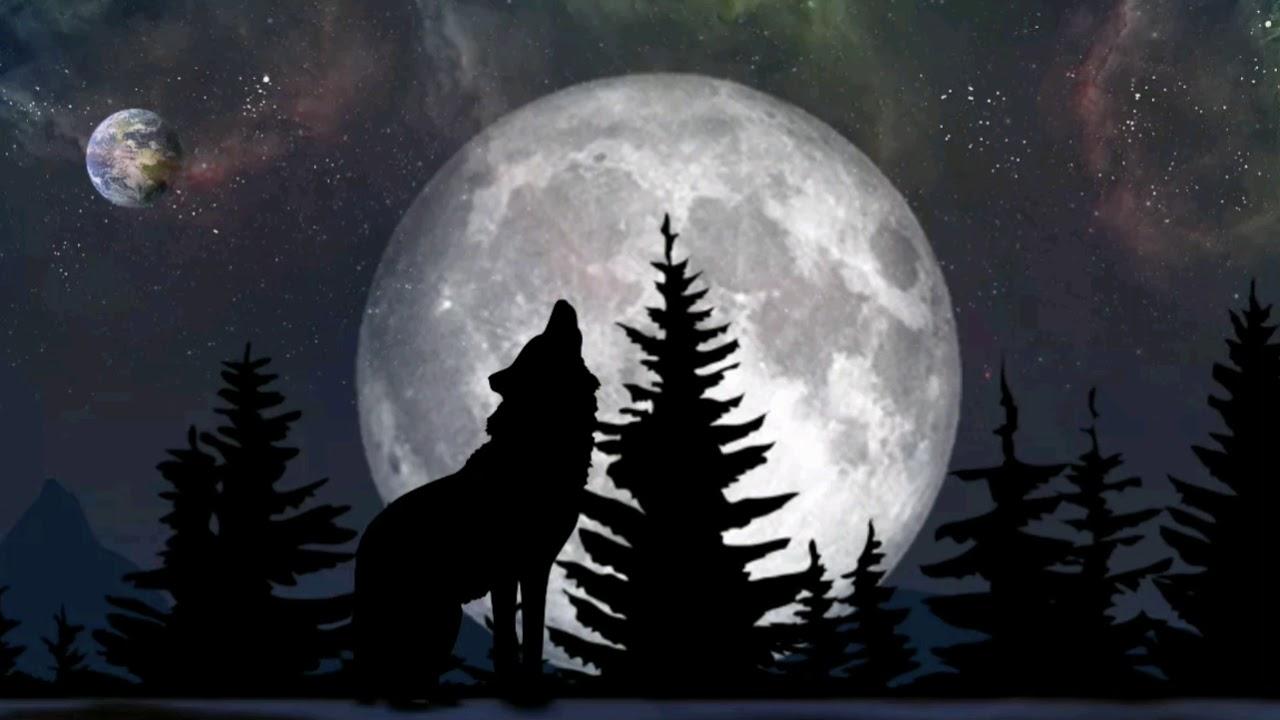 волк луна зима картинки правило, основой