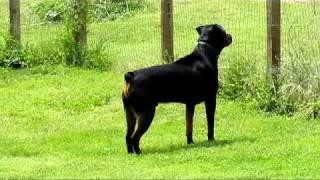 My Rottweiler Barking At Dog Next Door