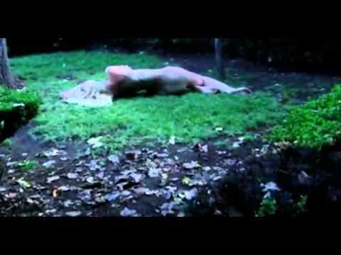 Trailer - A Experiencia 4 HD