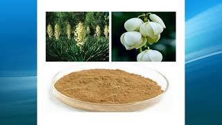 Yucca Extract supplier,wholesale,factory,bulk