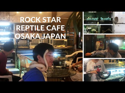 Rock Star Reptile Cafe Experience |  Osaka, Japan