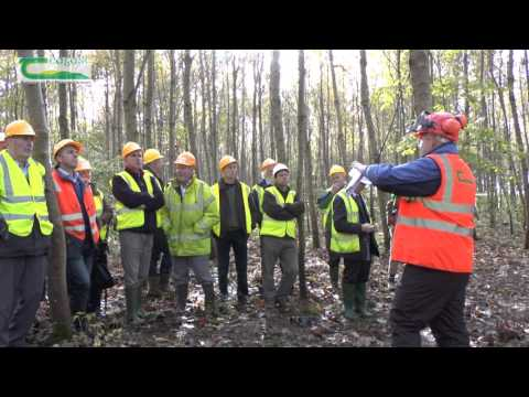 - Forestry Careers Ireland