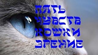 Пять чувств кошки  Зрение