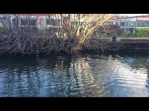 cormorant canal de l'Ourcq