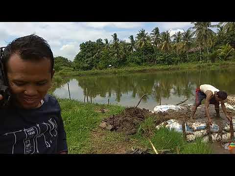 Membuat tanggul kolam ikan Yai Mp3