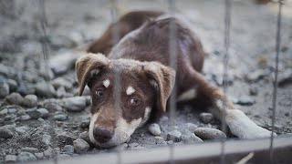 Hunde in Rumänien  Eine Reise die wir niemals vergessen