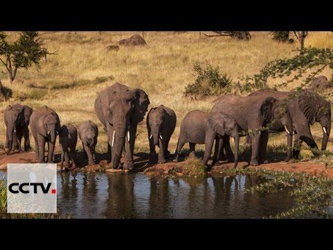 Les Chinois en Afrique Episode 1 Les Nouveaux Visages