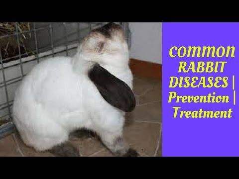 COMMON RABBIT DISEASES | Prevention | Treatment