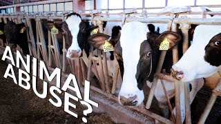 the TRUTH about AMERICA'S DAIRY COWS! | The Hoof GP