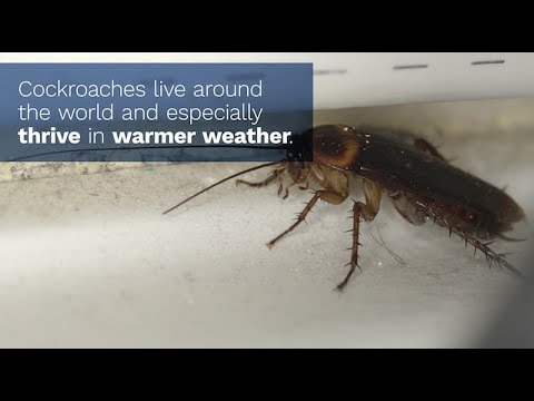 The 411 on Cockroaches in the Home
