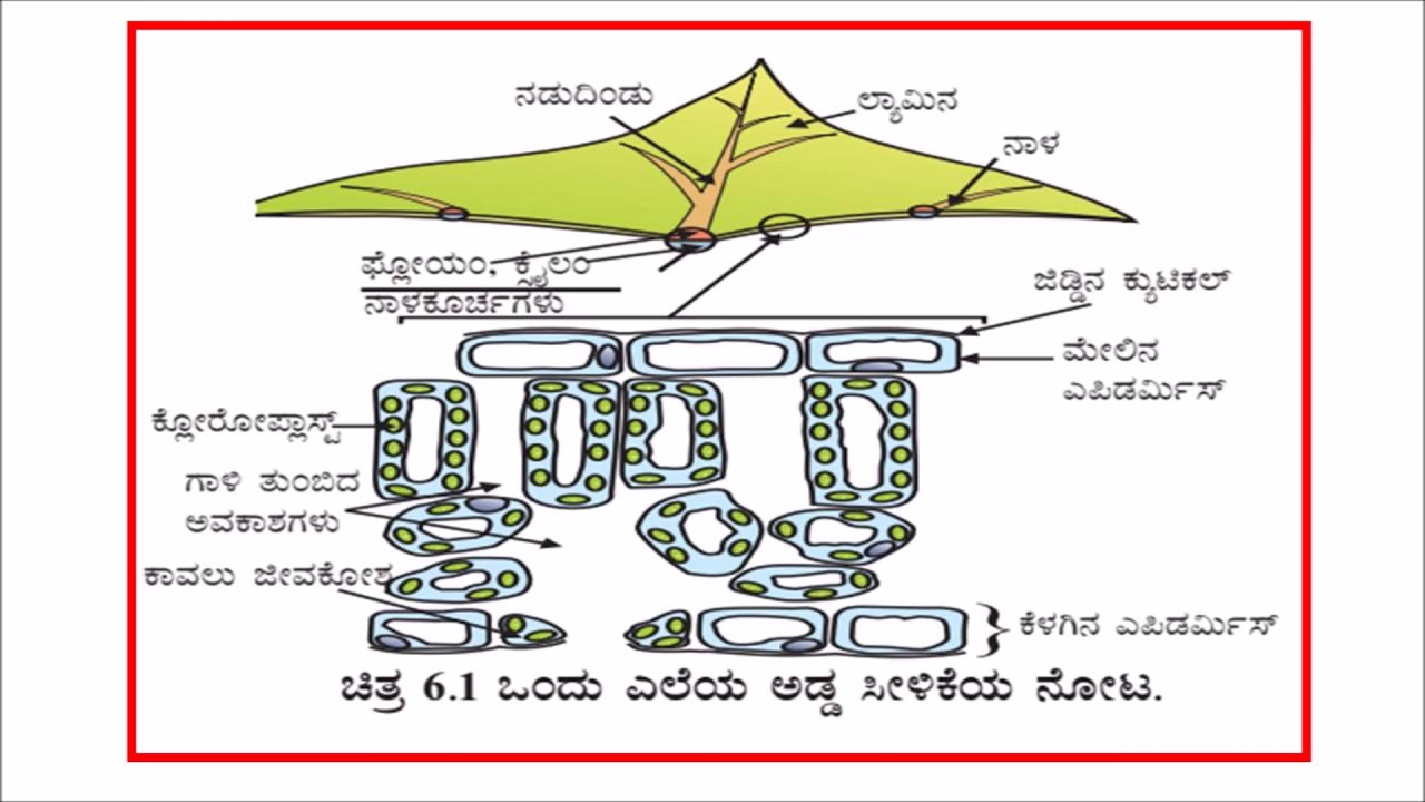 small resolution of class 10 science diagrams prescribed by kseeb
