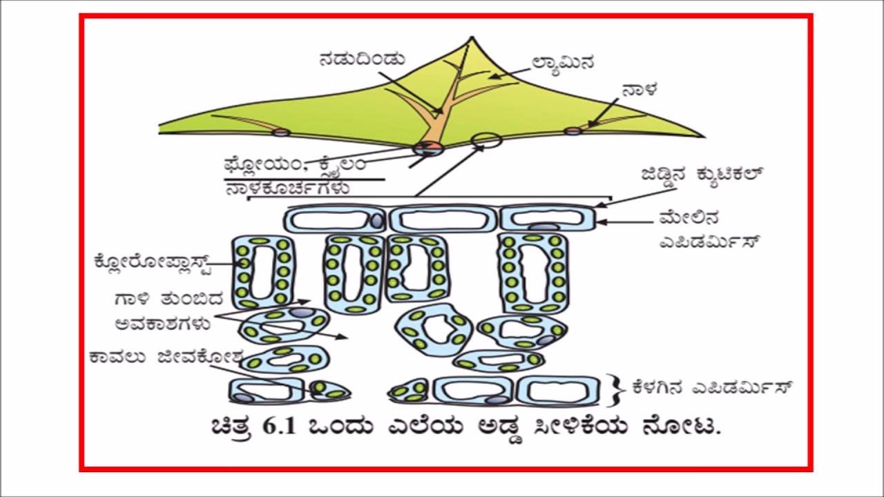 Science Drawing In Kannada