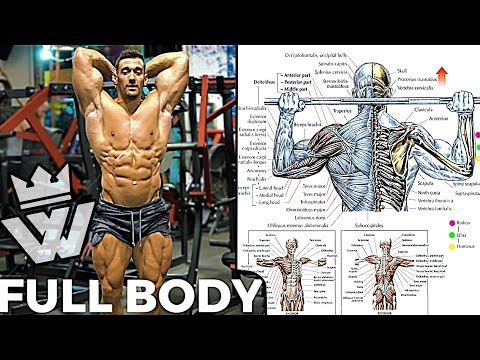 FULL BODY Workout | 10 Effective Exercises