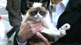 Grumpy Cat Interview 2013 on